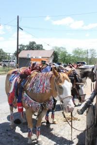 Festooned horses
