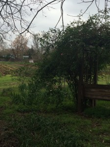 One of my favorite spots at Boggy Creek. The bench looking at the fields. When the vines are flowering, it's gorgeous.