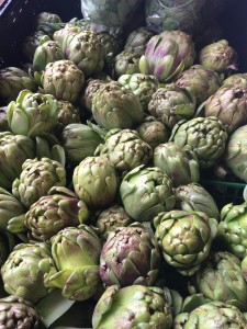 First sign of Spring. Artichokes. JBG.