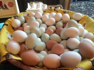 A rainbow of eggs.