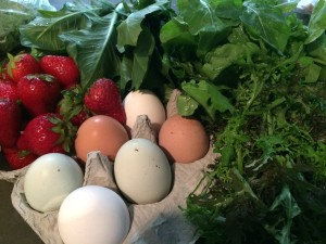 My purchases: eggs, strawberries, dandelion greens, arugula, curly mustard greens