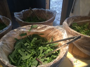 Quite possibly the last of one of my favorite salad mixes for the season - Maria's Brassica.